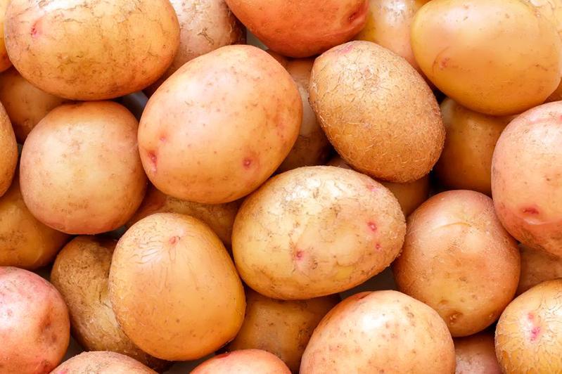 Казахстанские ученые вывели новый сорт картофеля