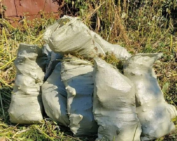 Плантацию конопли обнаружили в Петропавловске