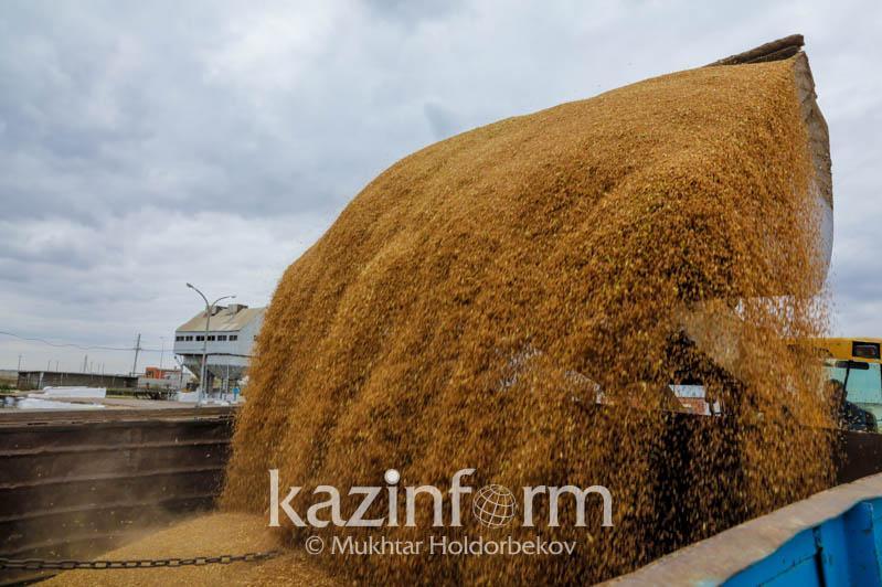 Сколько зерна поступило из нового урожая на хлебоприемные предприятия Казахстана