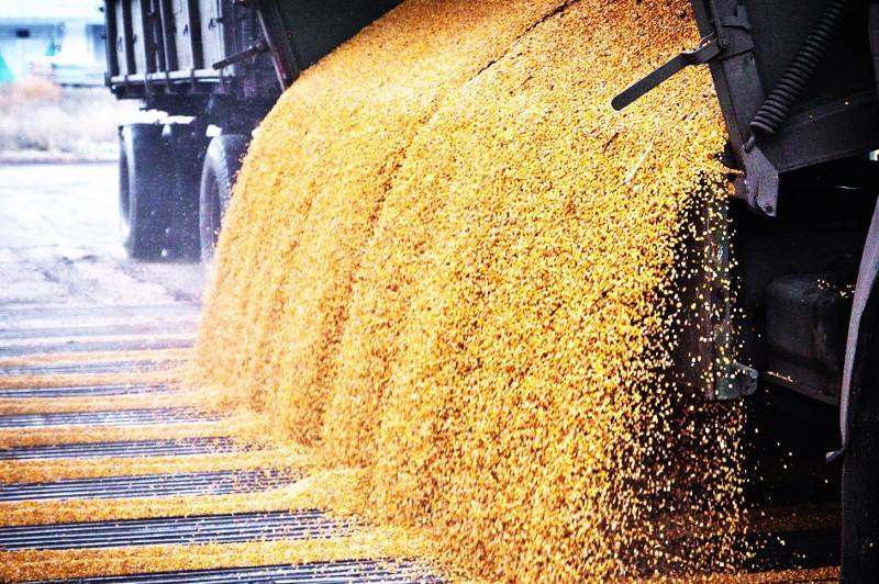 Казахстан намерен увеличить объемы экспорта зерна
