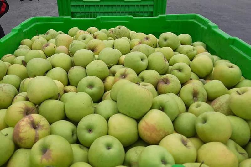 33 тысячи тонн яблок планируют собрать в Тюлькубасском районе Туркестанской области
