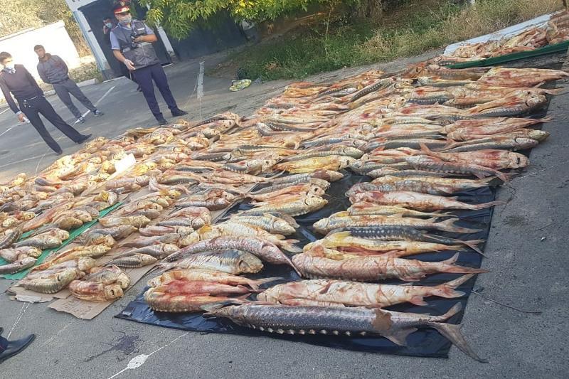 «Атырау-Орал» трассасында заңсыз ауланған 1 тонна бекіре тәркіленді