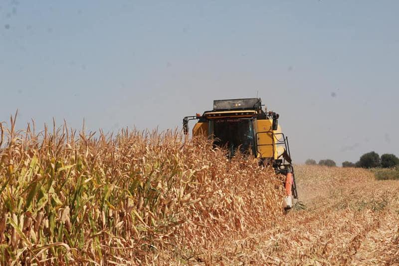 Более 24 млрд тенге составил объём сельхозпродукции в Ордабасинском районе