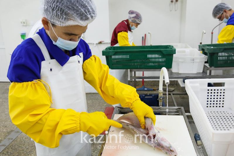 Что мешает развитию рыбной отрасли, рассказал Магзум Мирзагалиев