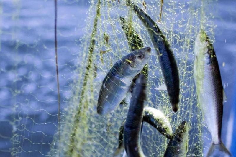 Инвентаризацию предприятий рыболовства проведут в Казахстане