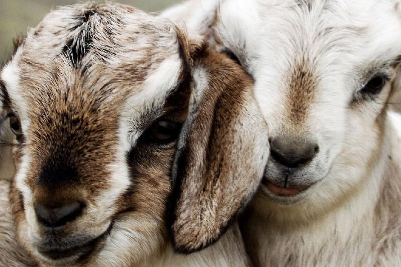 哈萨克斯坦对欧亚经济联盟羊肉进出口大幅下降