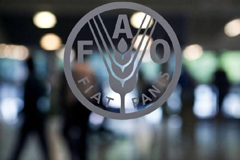 联合国粮农组织呼吁停止粮食损失与浪费