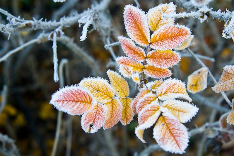 В Жамбылской и Алматинской областях ожидаются заморозки