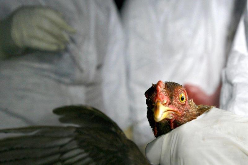 Сенаторы выразили обеспокоенность распространением птичьего гриппа в Казахстане