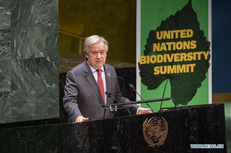 UN chief calls for greater ambition to reverse biodiversity loss