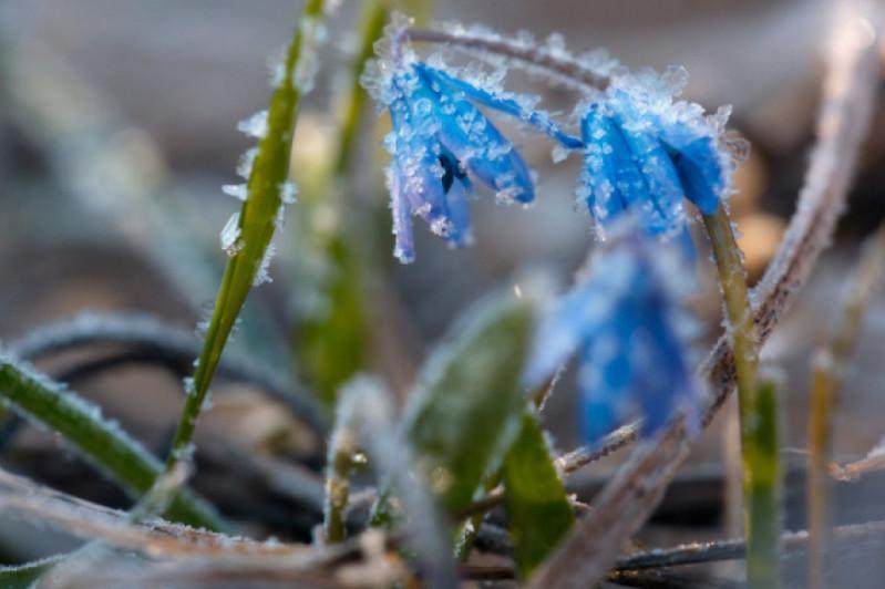 В двух регионах Казахстана ожидаются заморозки