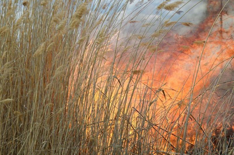 Тростниковые заросли вновь загорелись на побережье Каспия