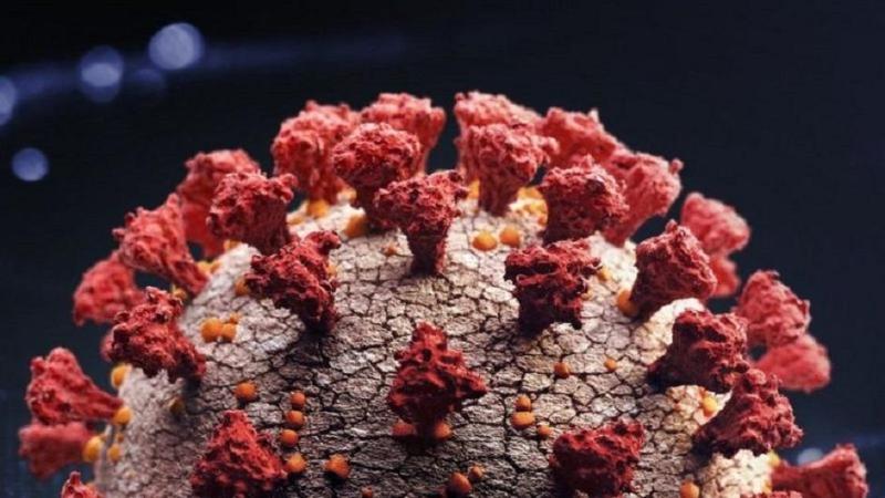 Коронавирус в мире: повторное заражение тяжелее первого, ВОЗ против идеи  группового иммунитета
