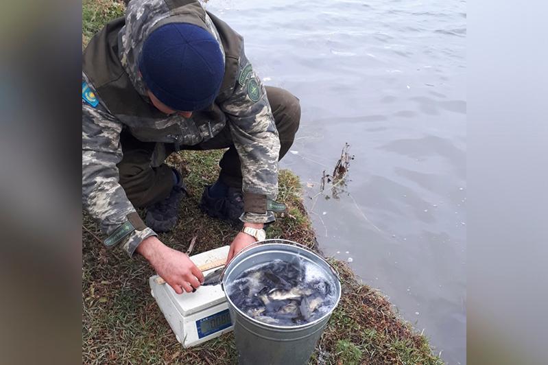 100 тысяч сеголеток сазана выпустили в Шульбинское водохранилище