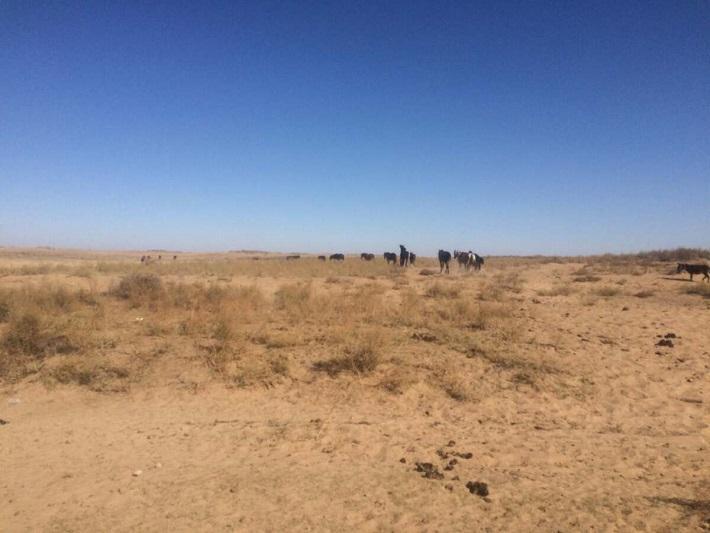 Сорок лошадей вернули хозяину жамбылские полицейские