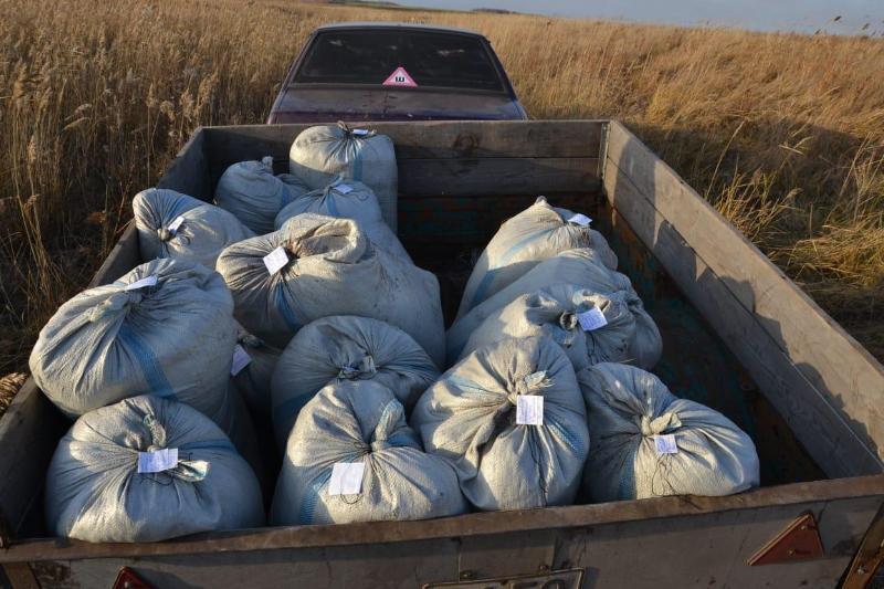 1,3 тонны ценных рачков изъяли у браконьеров в СКО