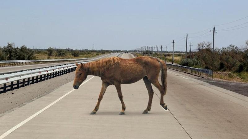 Лошади стали причиной ДТП в Павлодарской области