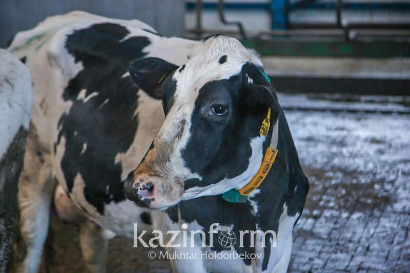 Выпуск продукции увеличился в животноводстве за год на 3%