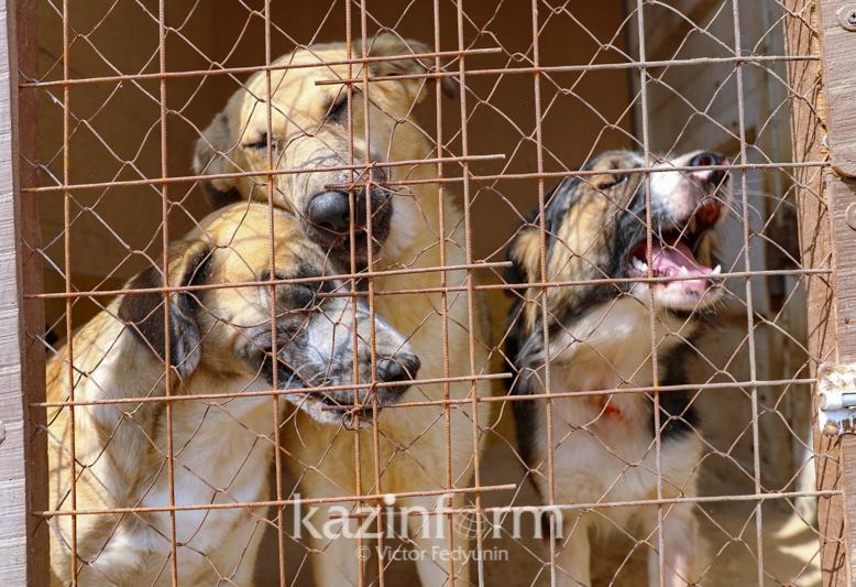 В Алматы осиротел приют для животных: горожане ищут новых хозяев питомцам