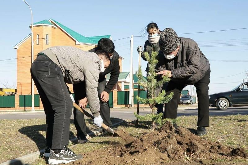 Экологическую акцию по посадке деревьев провели в Кокшетау