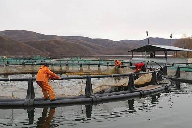 Шығыста өсірілетін балық көлемі 2030 жылға қарай 4 мың тоннаға жетуі тиіс