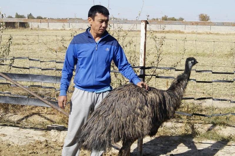 Предприниматель из Кентау занимается разведением страусов