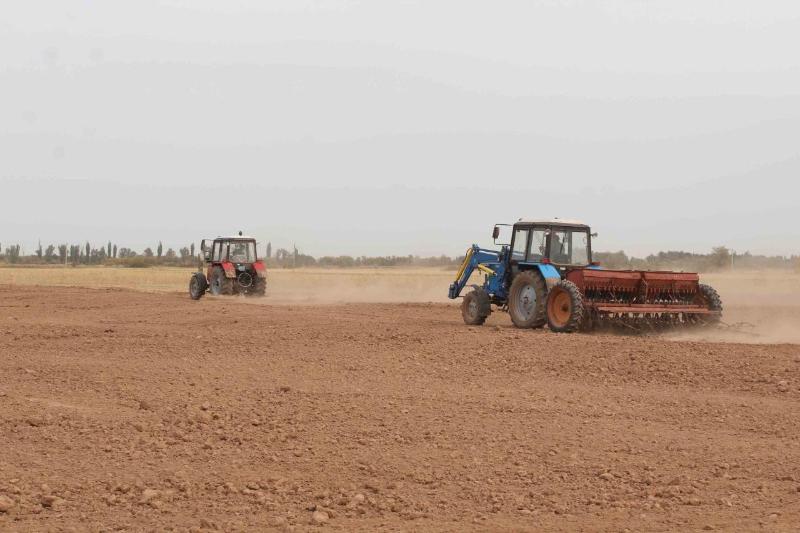 Посевные площади под рапс увеличивают жамбылские аграрии