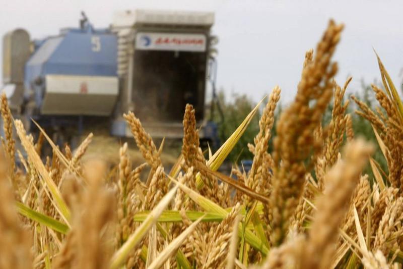 克孜勒奥尔达州创下水稻单产新高