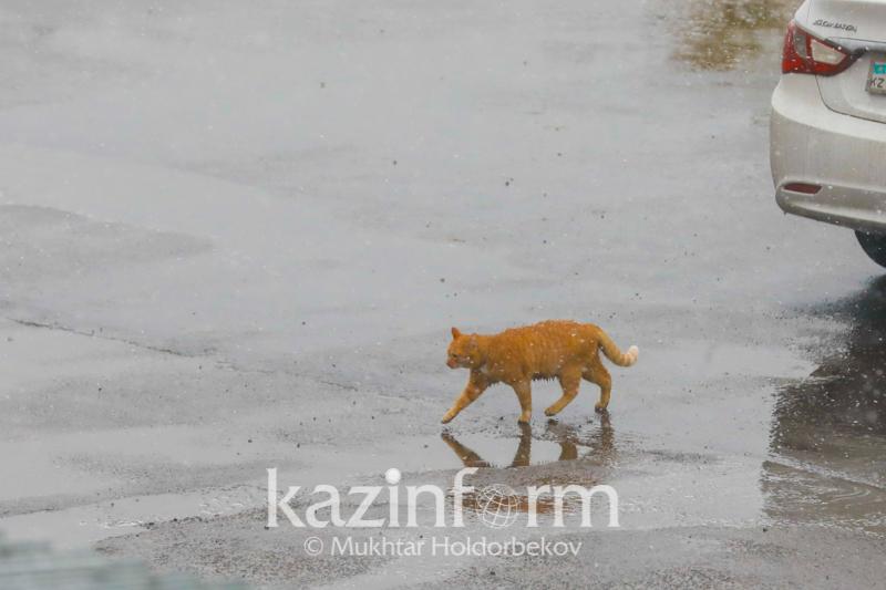 Прогноз на три дня: неустойчивая погода будет в северной половине Казахстана