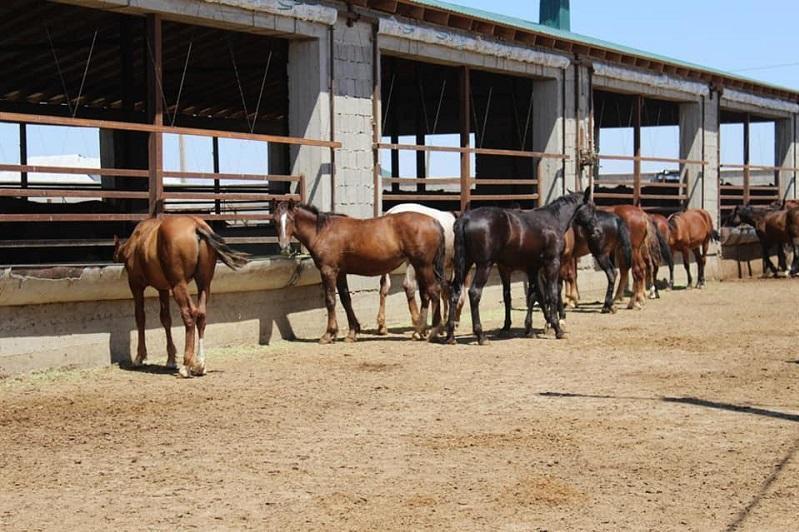 江布尔州牲畜存栏量接近400万只