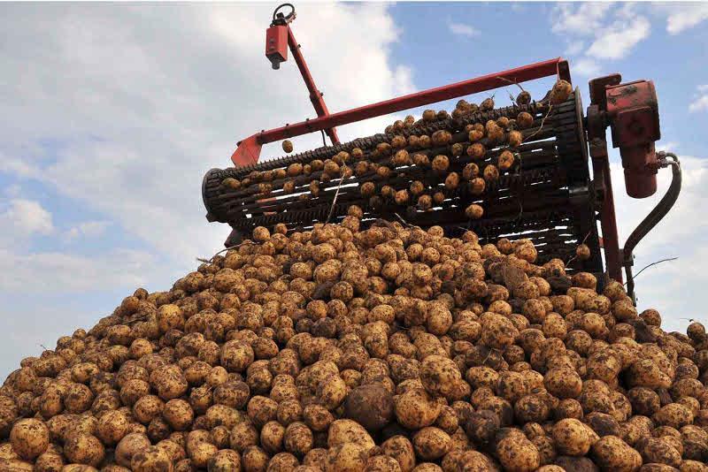 巴甫洛达尔州收获近60万吨土豆