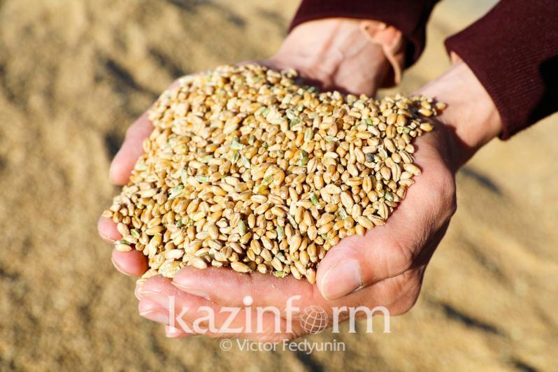 Казахстанское зерно пользуется повышенным спросом - Минсельхоз