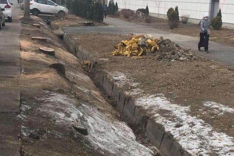 Массовая вырубка деревьев перед торговым домом Алматы - в акимате проведут расследование