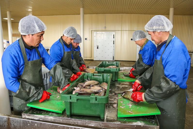 克孜勒奥尔达州正在实施超过5500亿坚戈的项目