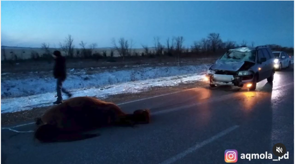 Около 300 лошадей паслись без табунщика возле трассы в Акмолинской области
