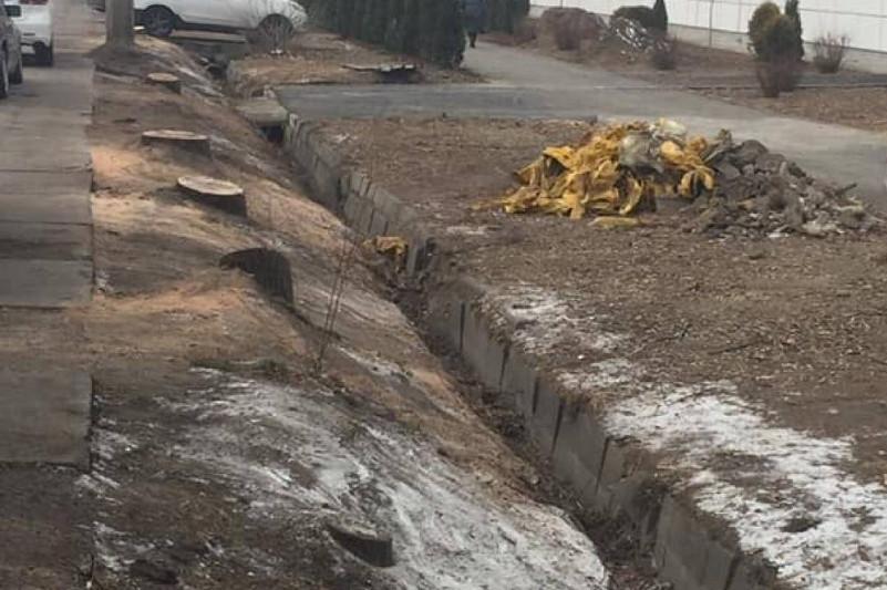 Массовая вырубка деревьев в Алматы: начато досудебное расследование