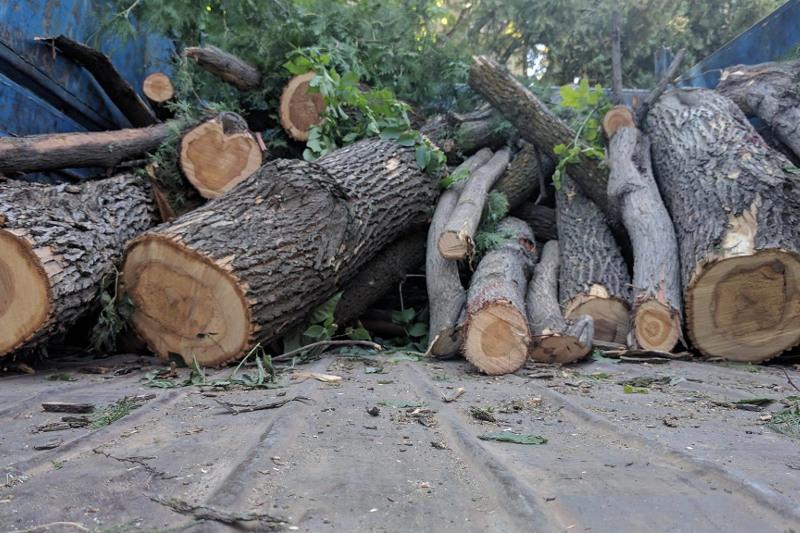 В договоре с подрядчиками нет пункта о вырубке деревьев - акимат Алматы