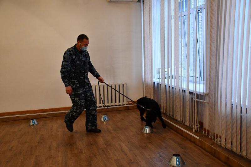 Найти по запаху преступника и доказать его вину помогают собаки в Акмолинской области
