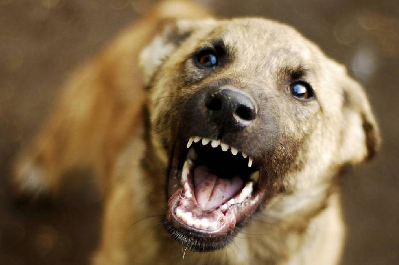 Собака покусала 13-летнюю девочку в Экибастузе