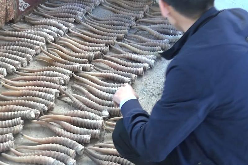 Две преступные группы промышляли охотой на сайгаков в ЗКО