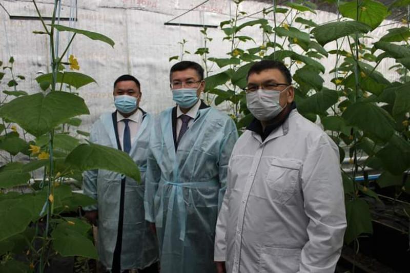 Сәтбаев қаласында Қарағанды облысындағы алғашқы термос-жылыжай ашылды