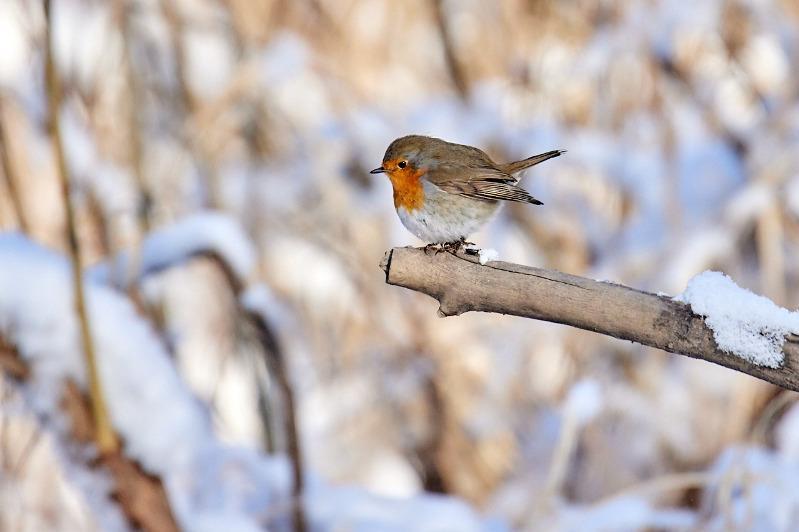 Редкую птицу удалось сфотографировать в Семее