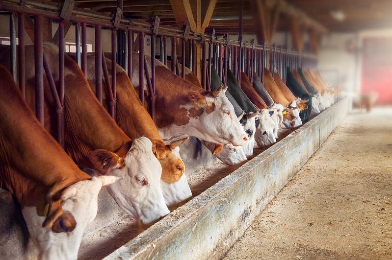 Эксперт: Без инвестора, помощи государства фермеры не смогут сами построить МТФ