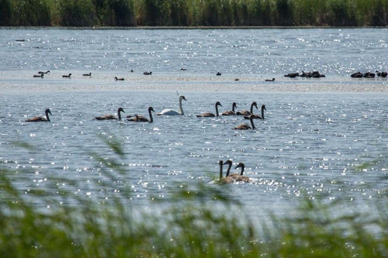 Алтай Кульгинов о Талдыколе: Озеро никто трогать не будет