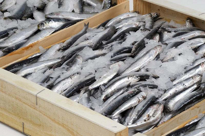 阿克套将投资建设一座大型鲟鱼加工厂