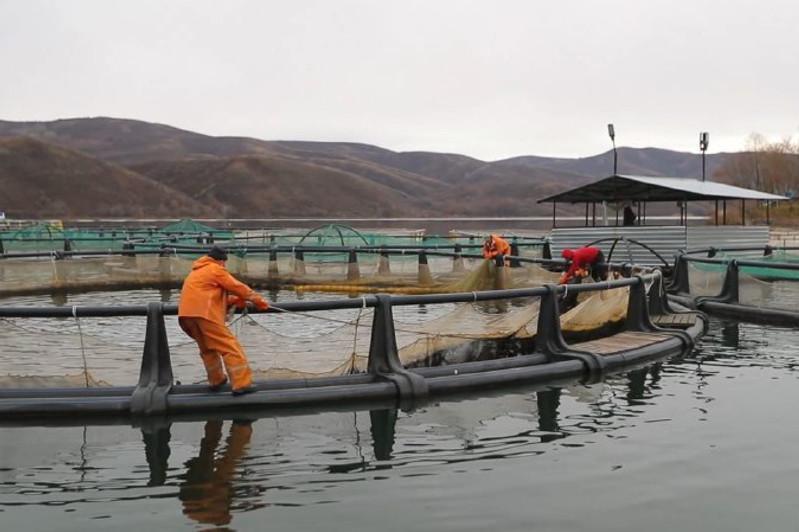 东哈州计划向俄罗斯出口鱼类