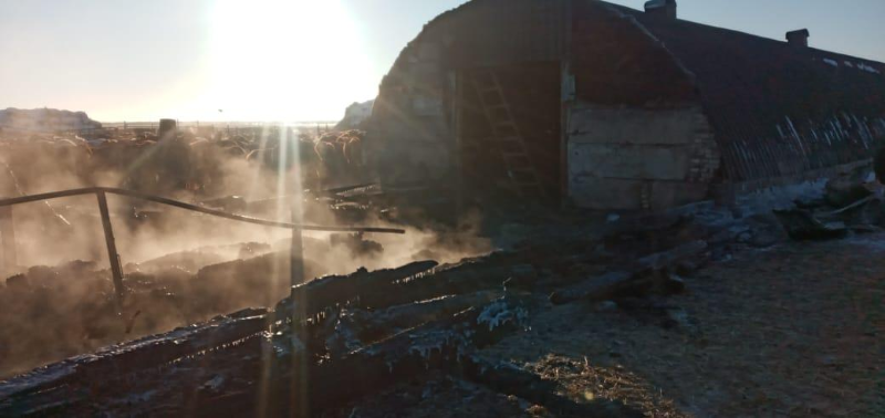 Около 70 голов скота сгорело при пожаре в Карагандинской области