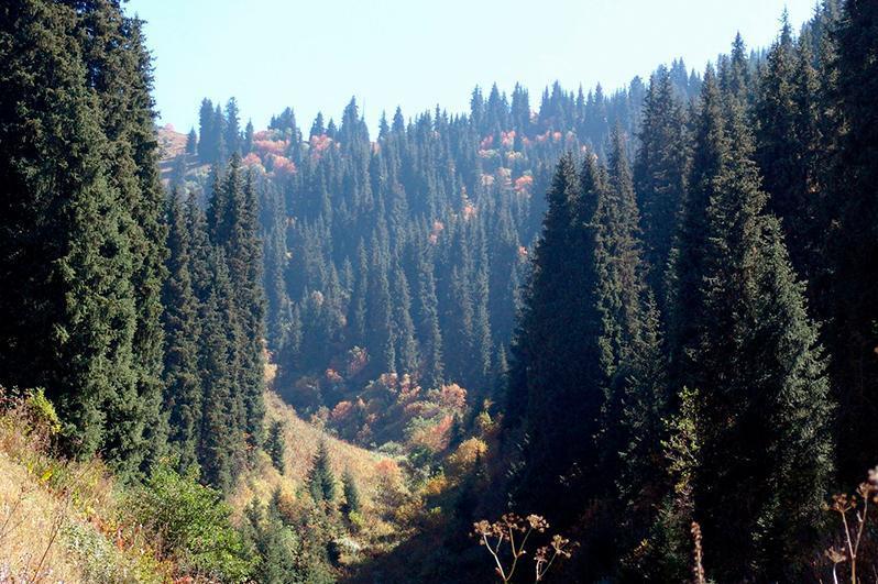 Қазақстанда бес жылда орман қорына 2 млрд түп ағаш егіледі