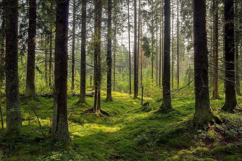 Земля за 13 лет потеряла более 40 млн гектаров леса