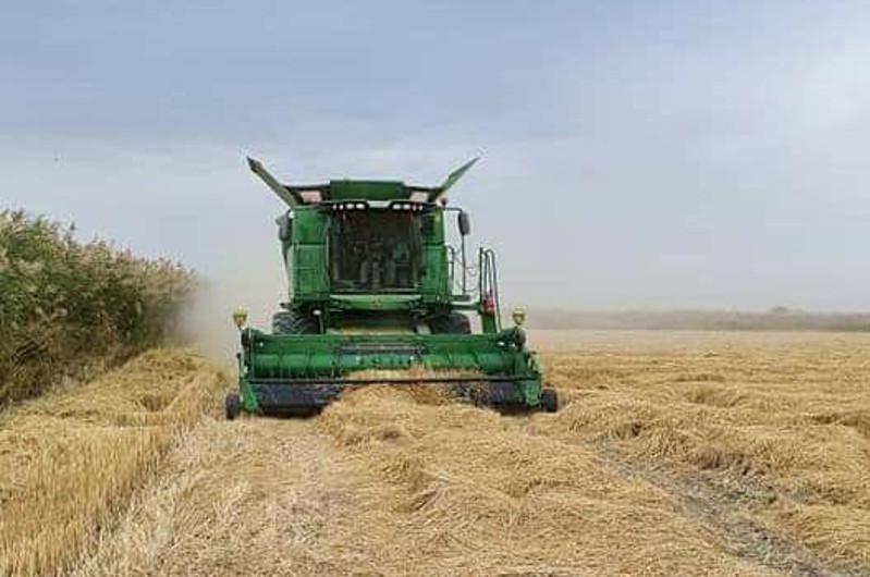 На 34 млрд тенге произвели сельскохозяйственной продукции в Шардаринском районе